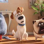 Pets - Vita da animali | Film da Vedere