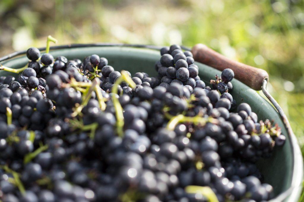 Signori del vino, nuova edizione al via su Rai 2: ecco quand
