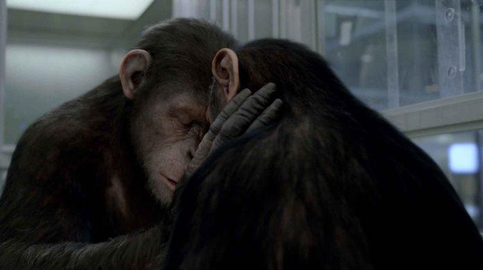 film L'alba del pianeta delle scimmie