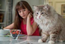 Film una vita da gatto