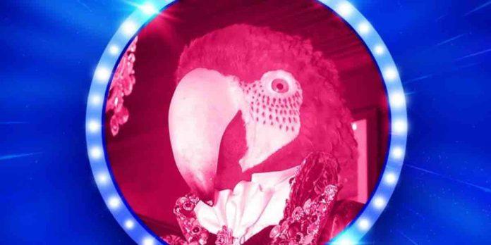 Pappagallo vince il cantante mascherato 2021