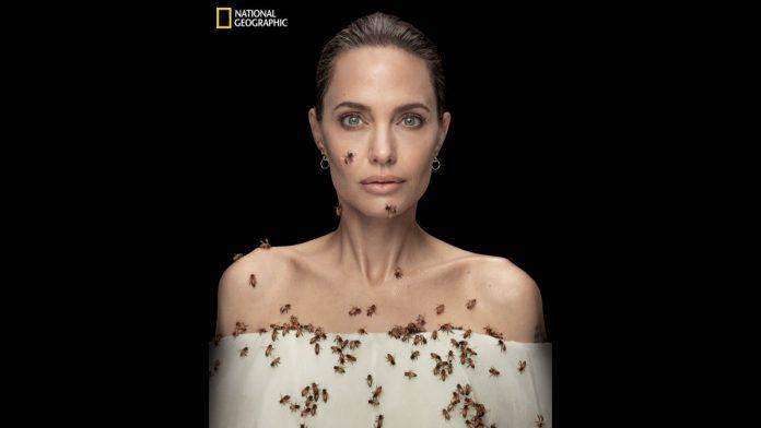 Angelina Jolie api
